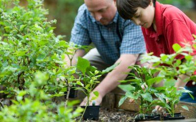 Biodiversité: le projet jardin d'Athletica pour le microbiote et l'environnement